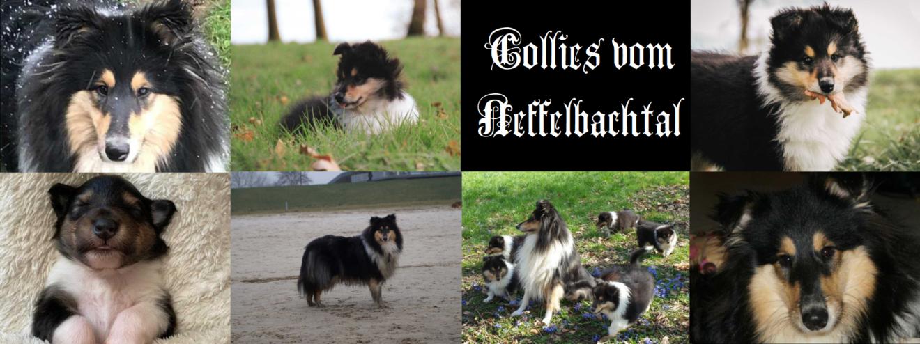 Collies-vom-Neffelbachtal
